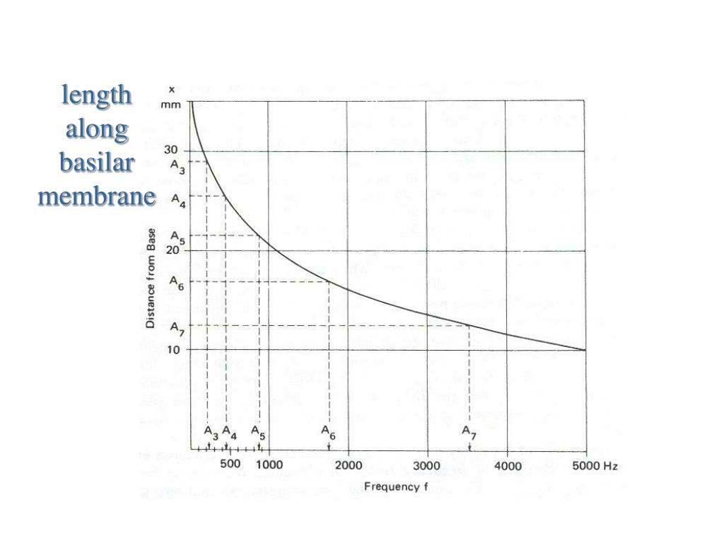 length along basilar membrane