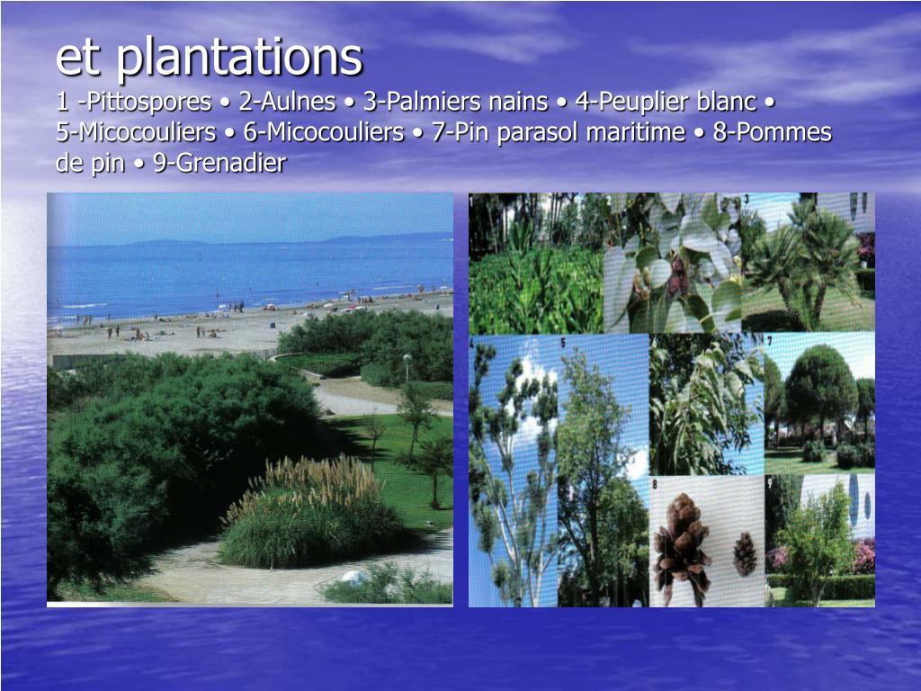et plantations