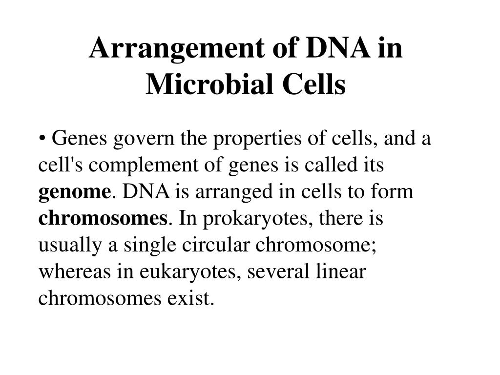 Arrangement of DNA in Microbial Cells
