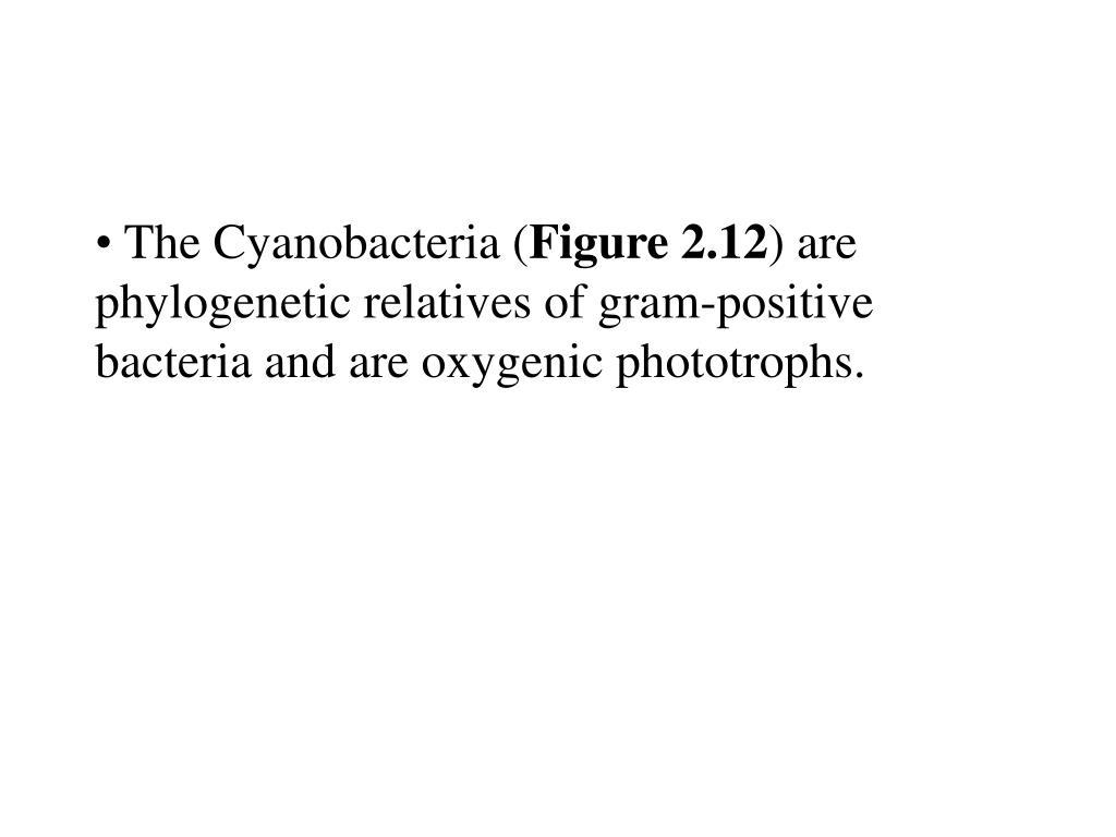 The Cyanobacteria (