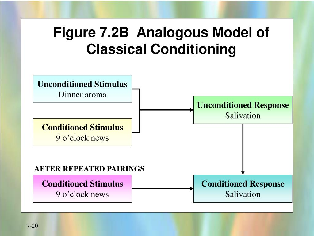 Figure 7.2B  Analogous Model of Classical Conditioning