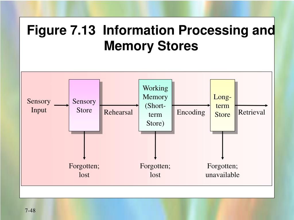 Figure 7.13  Information Processing and Memory Stores