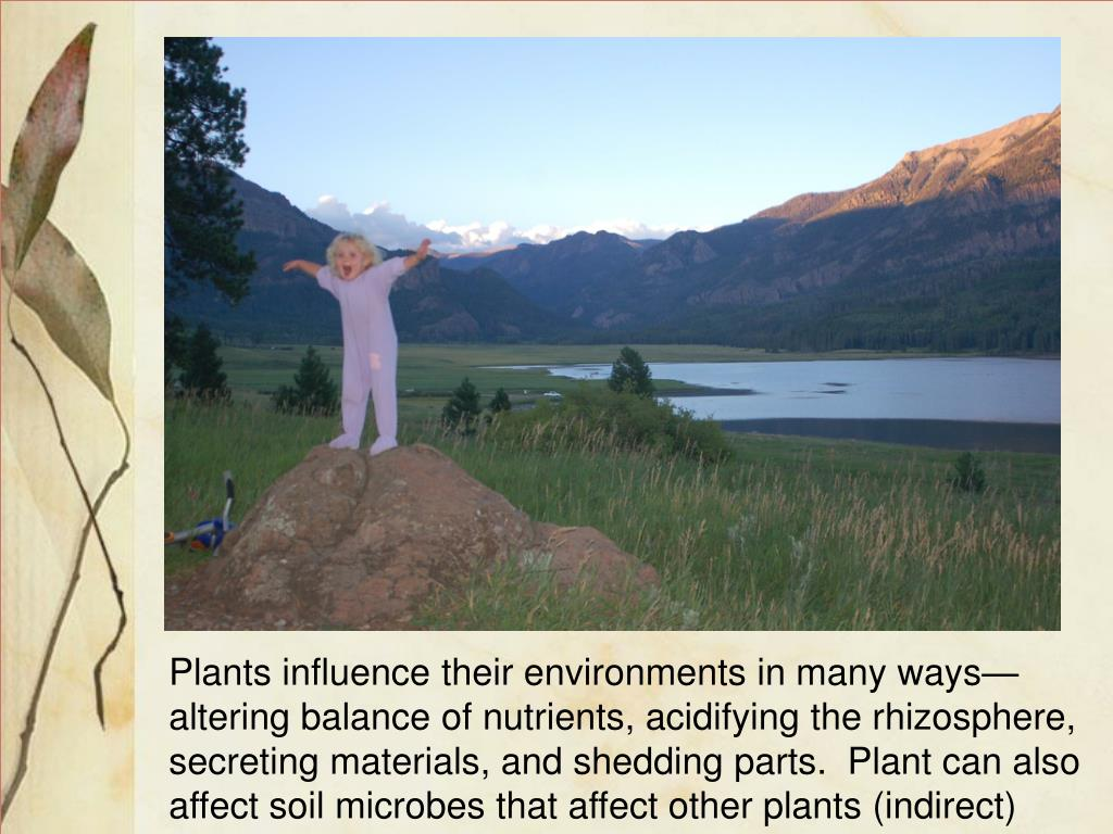 Plants influence their environments in many ways—altering balance of nutrients, acidifying the rhizosphere, secreting materials, and shedding parts.  Plant can also affect soil microbes that affect other plants (indirect)