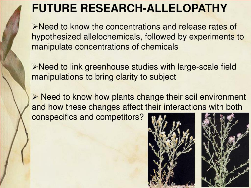 FUTURE RESEARCH-ALLELOPATHY