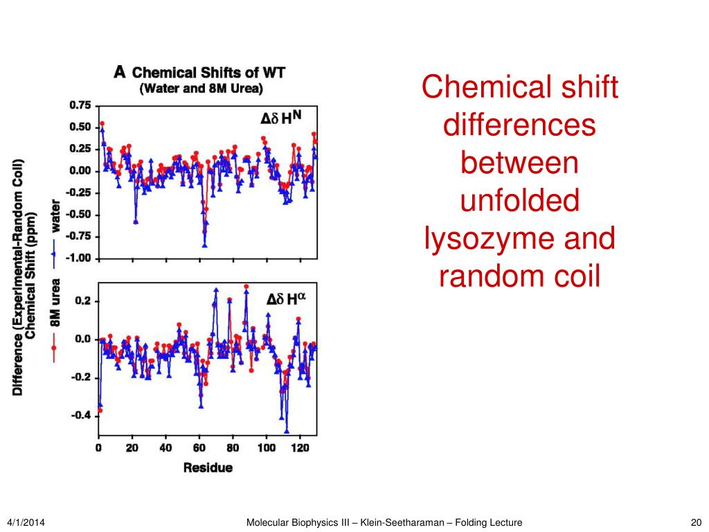 Chemical shift differences between unfolded lysozyme and random coil