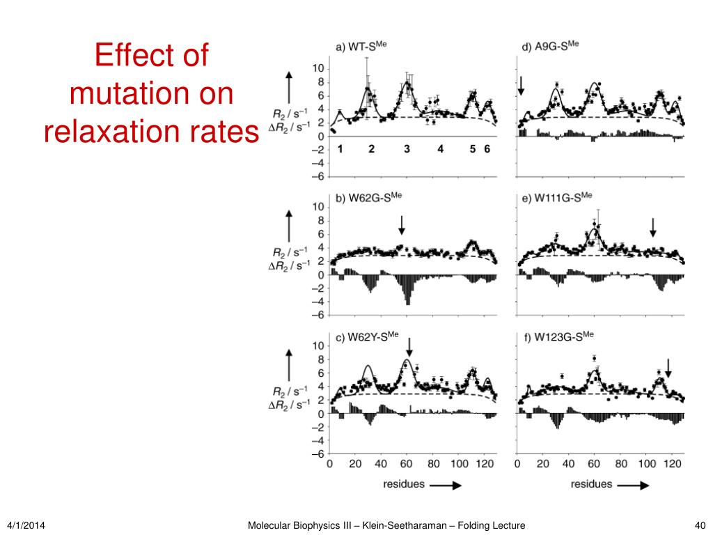 Effect of mutation on relaxation rates