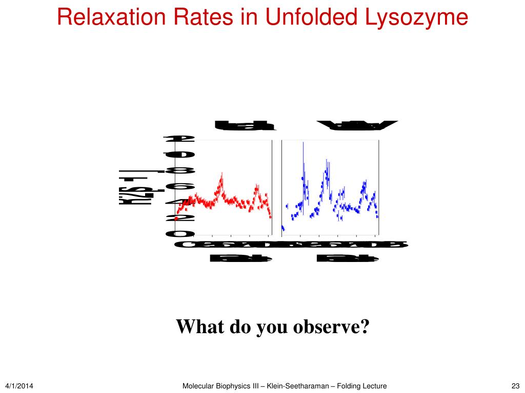 Relaxation Rates in Unfolded Lysozyme