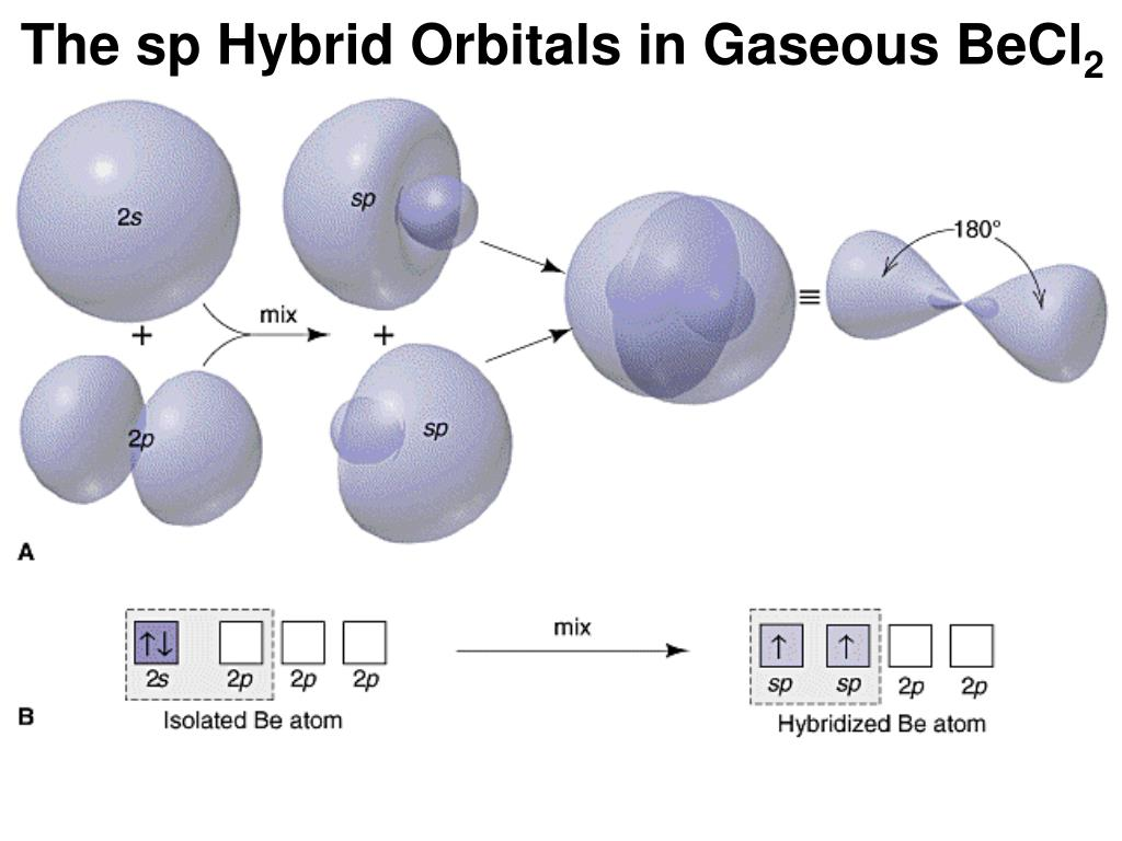 The sp Hybrid Orbitals in Gaseous BeCl