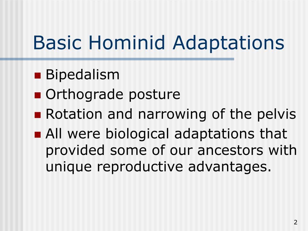 Basic Hominid Adaptations