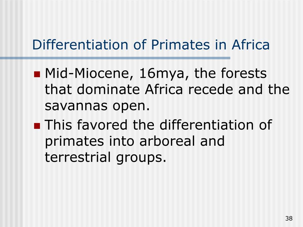 Differentiation of Primates in Africa