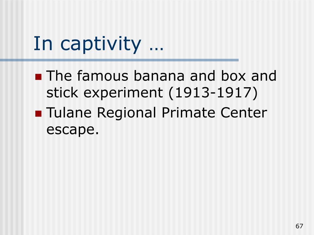 In captivity …