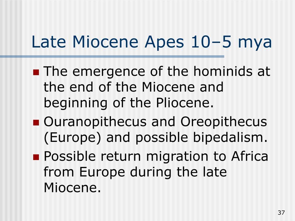 Late Miocene Apes 10–5 mya