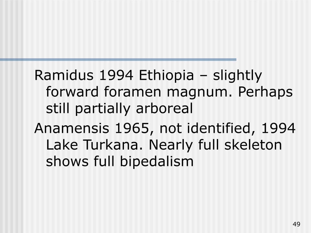 Ramidus 1994 Ethiopia – slightly forward foramen magnum. Perhaps still partially arboreal