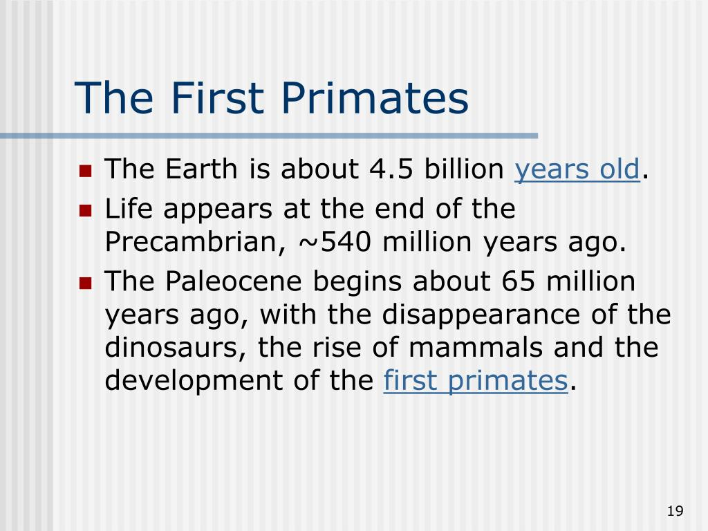 The First Primates