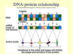 dna protein relationship27