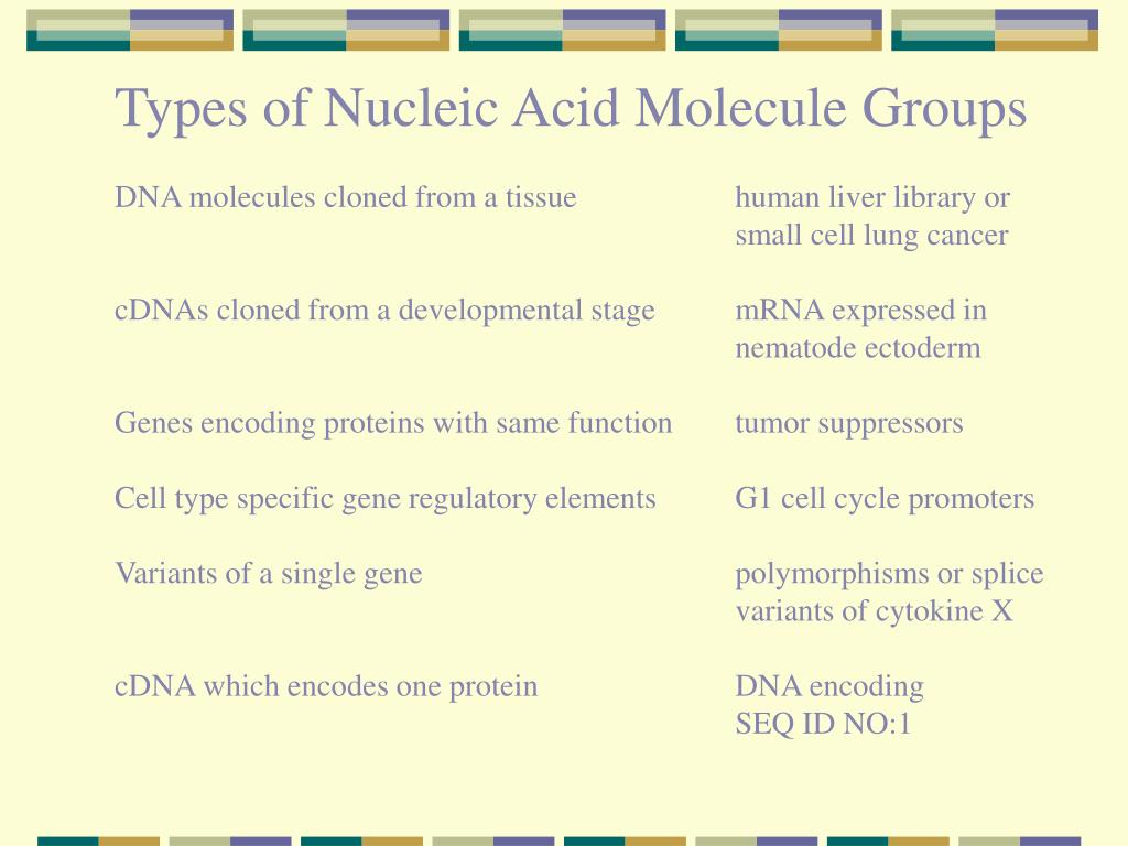 Types of Nucleic Acid Molecule Groups