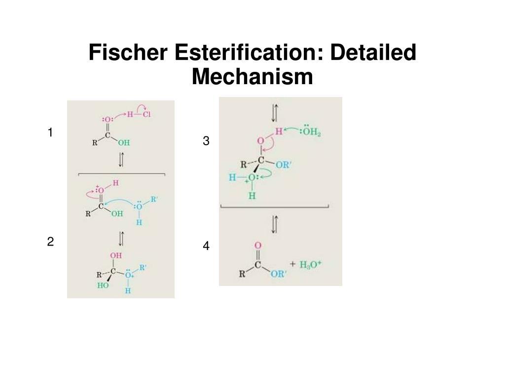 Fischer Esterification: Detailed Mechanism