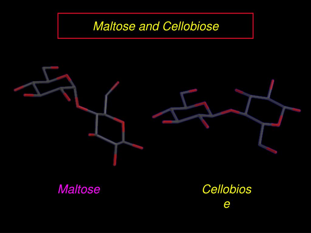 Maltose and Cellobiose