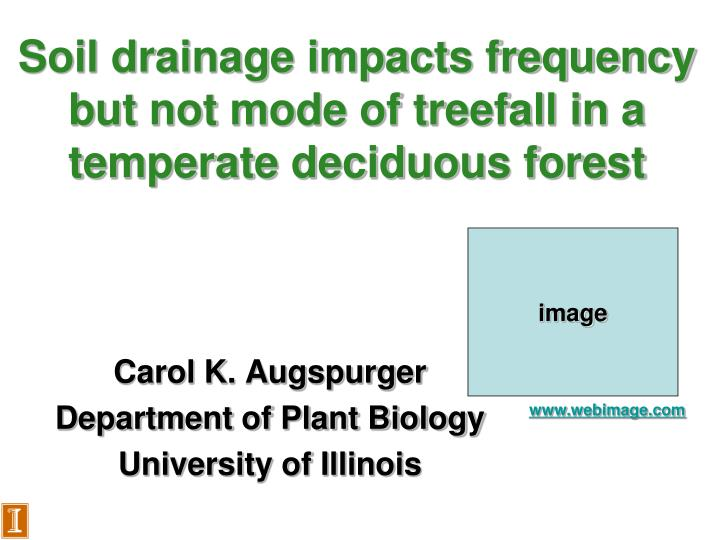 Soil drainage impacts frequency but not mode of treefall in a temperate deciduous forest