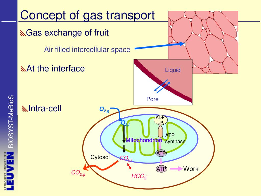 Concept of gas transport
