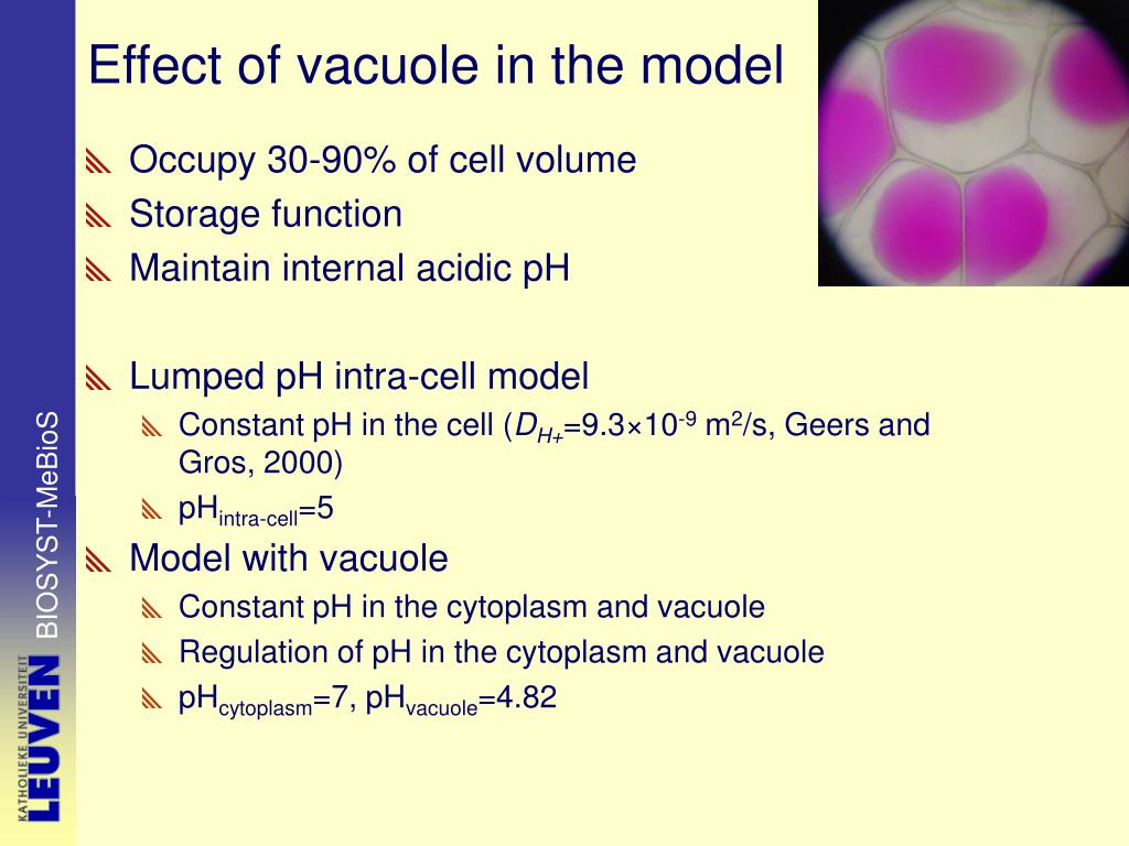 Effect of vacuole in the model