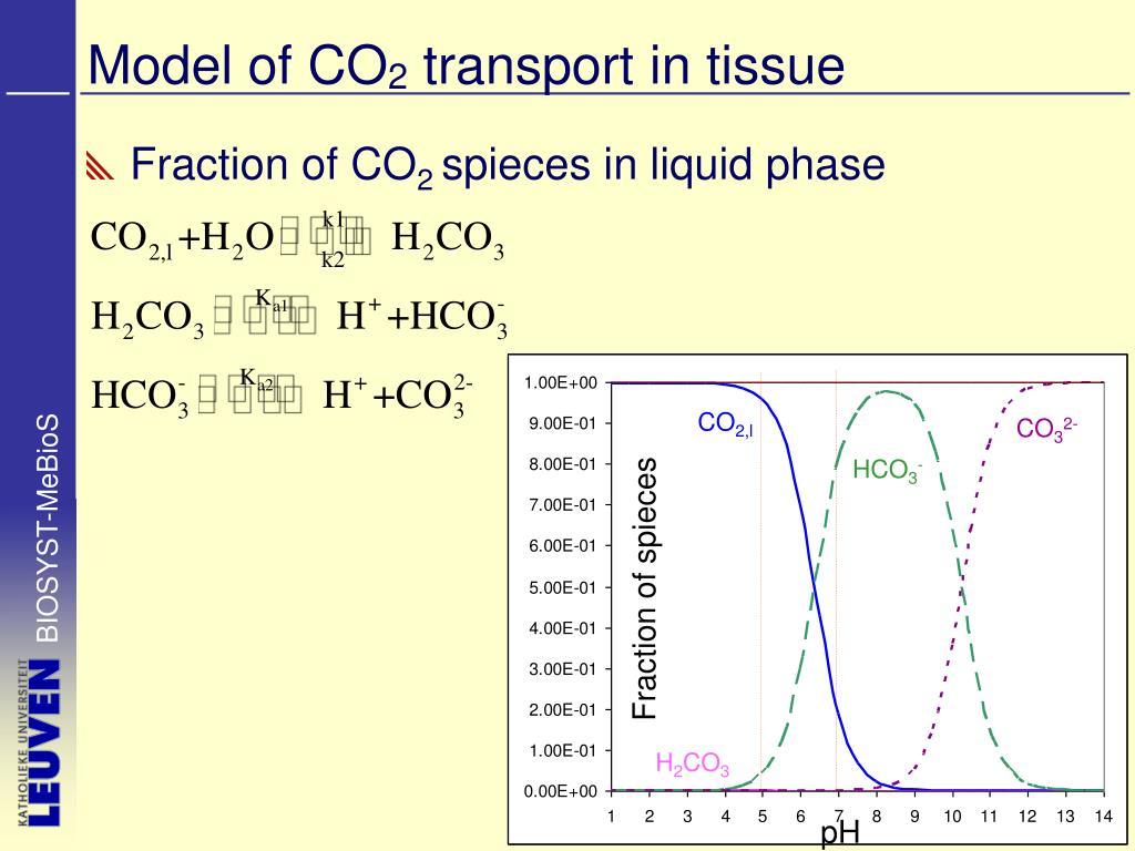 Model of CO