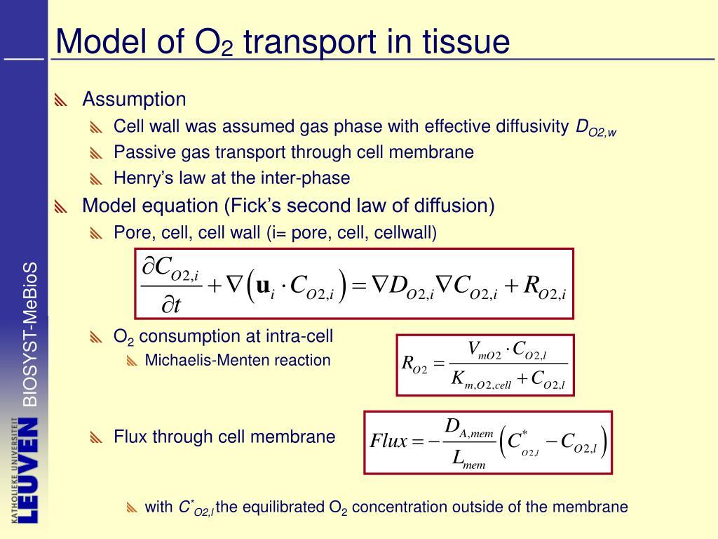 Model of O