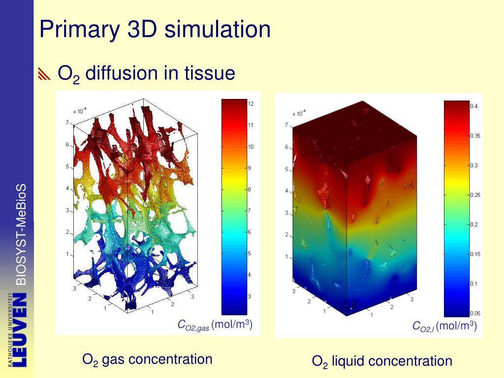 Primary 3D simulation