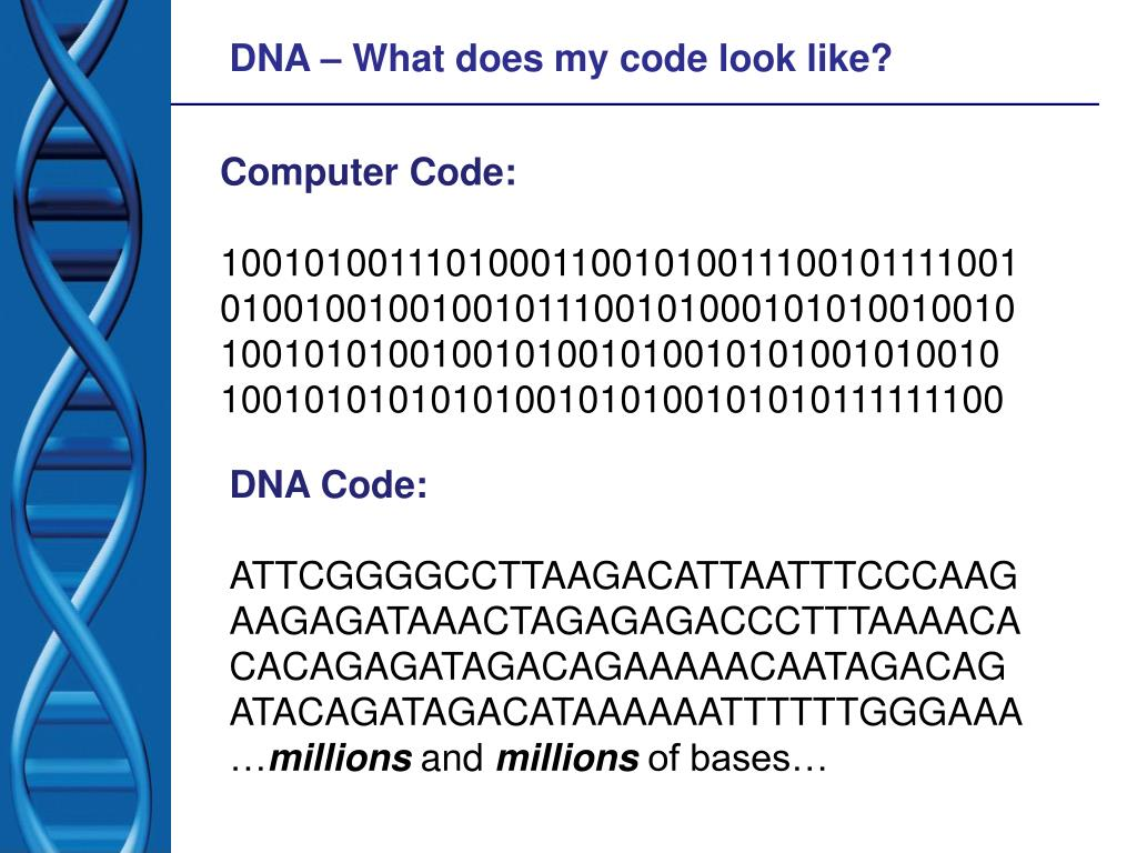 DNA – What does my code look like?