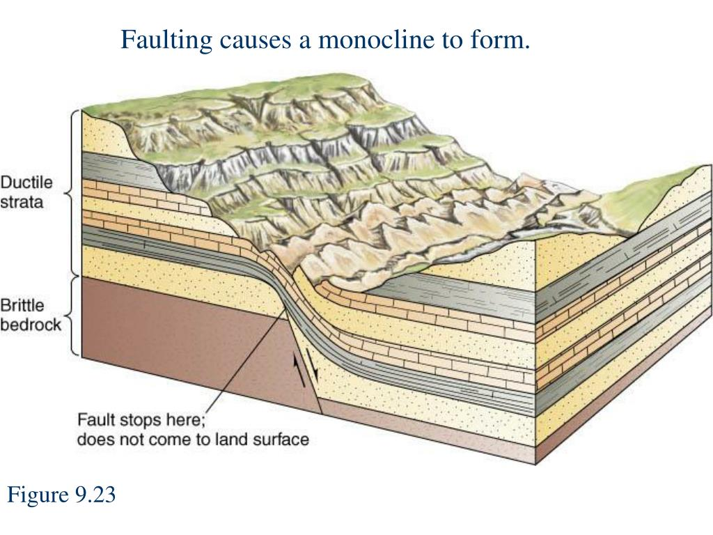 Faulting causes a monocline to form.