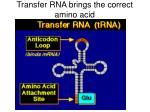 transfer rna brings the correct amino acid