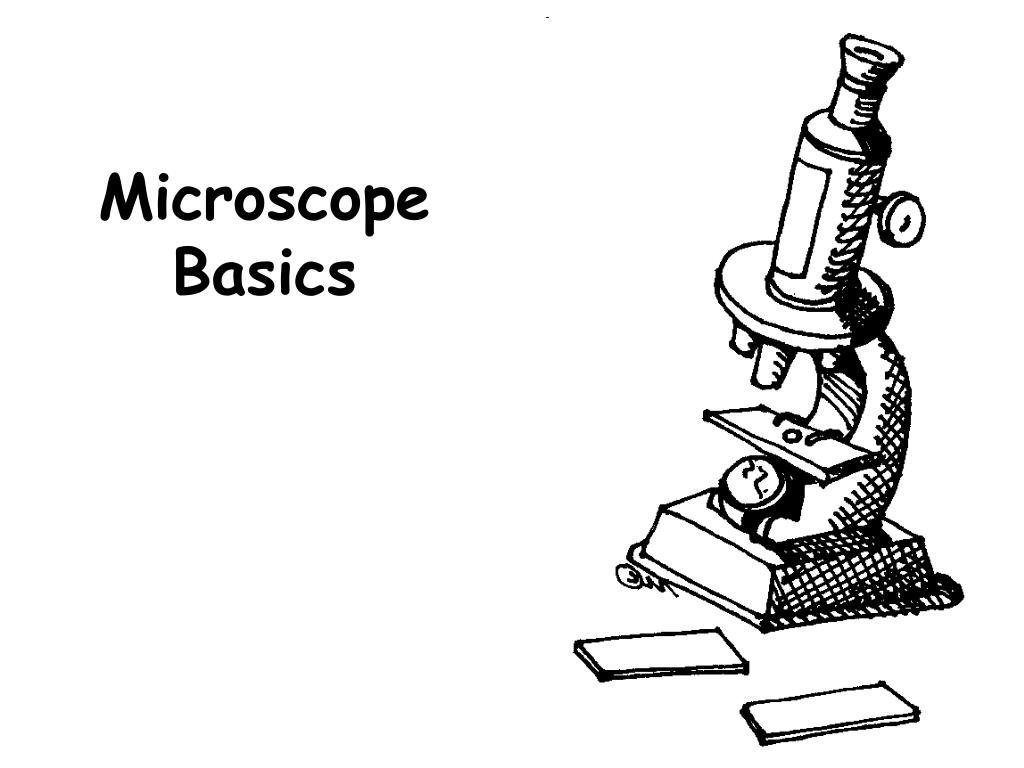 microscope basics l.