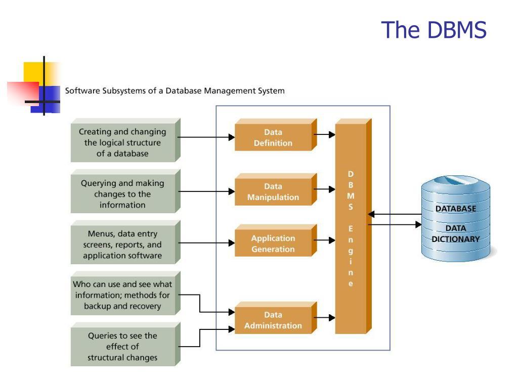 The DBMS