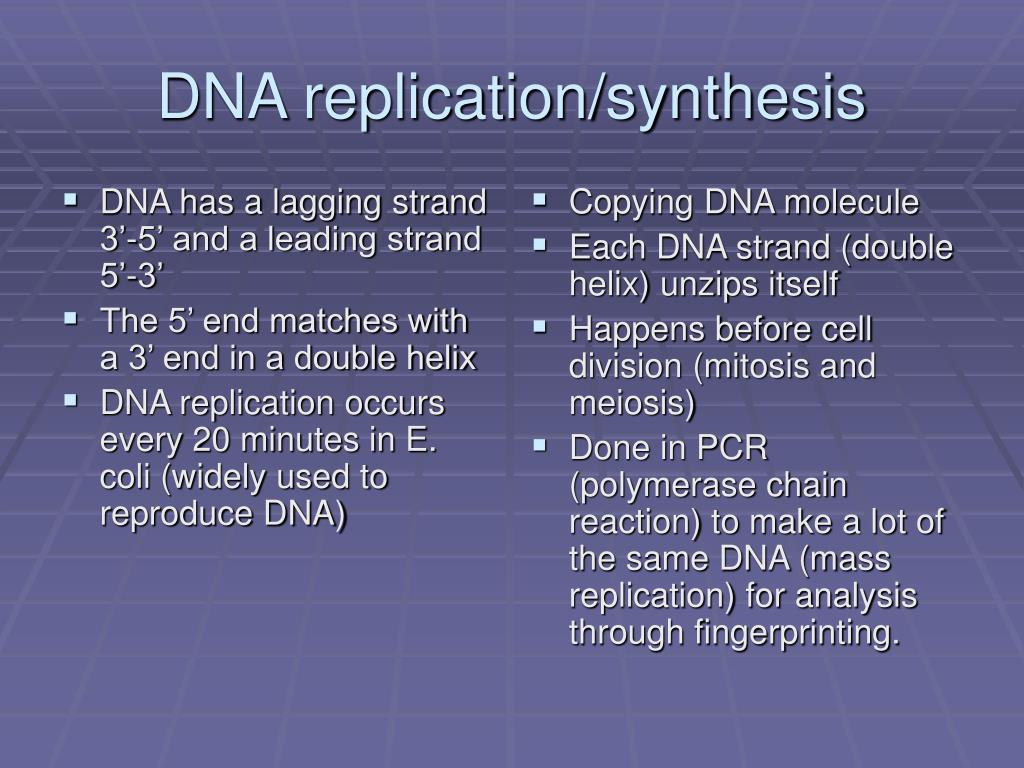 DNA has a lagging strand 3'-5' and a leading strand 5'-3'