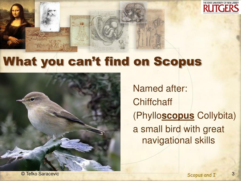 What you can't find on Scopus