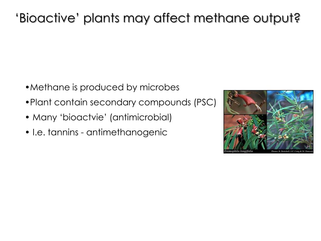 'Bioactive' plants may affect methane output?