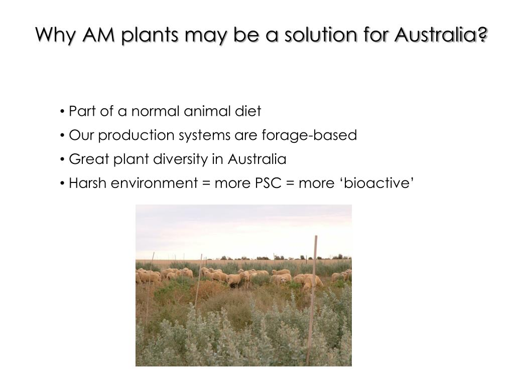 Why AM plants may be a solution for Australia?