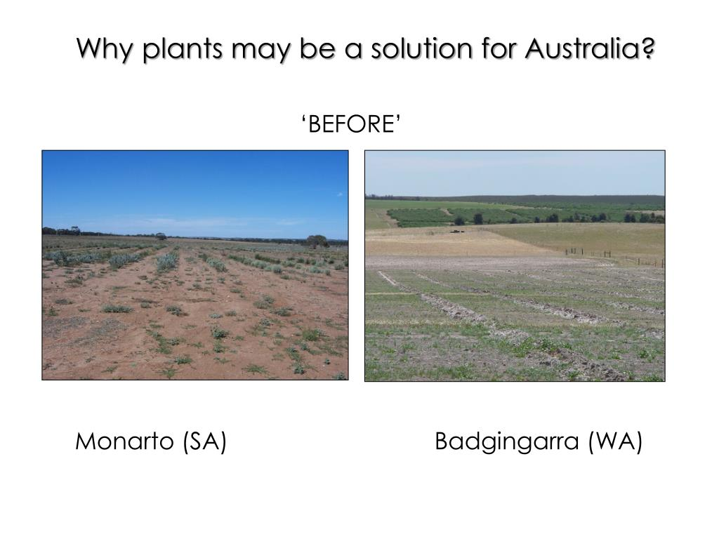 Why plants may be a solution for Australia?