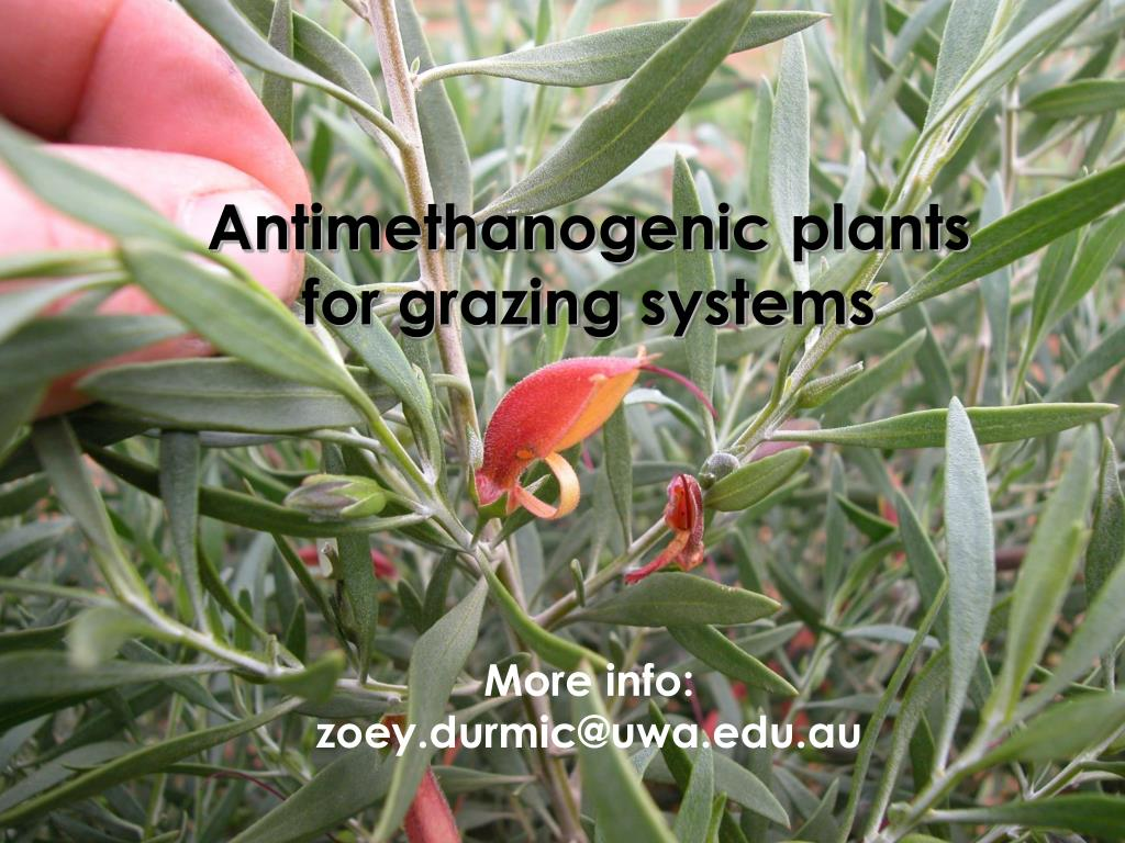 Antimethanogenic