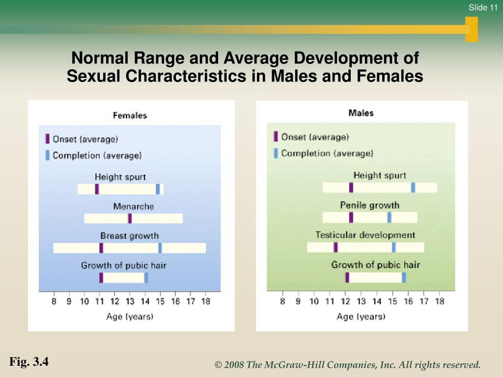 Normal Range and Average Development of Sexual Characteristics in Males and Females