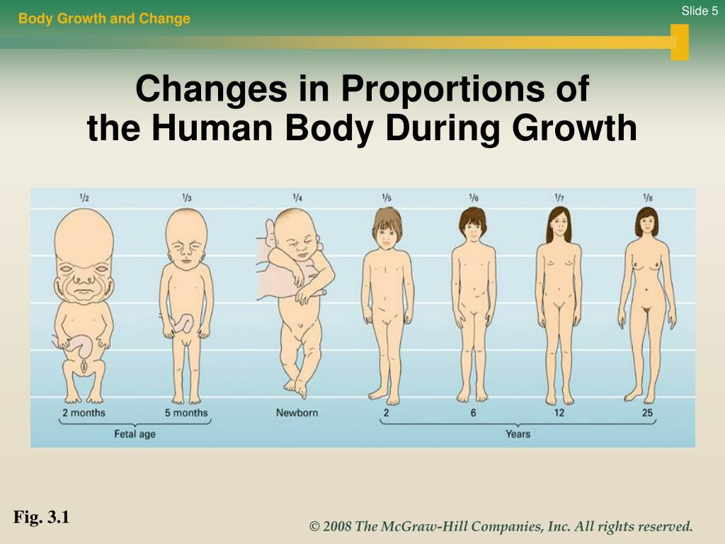 Body Growth and Change