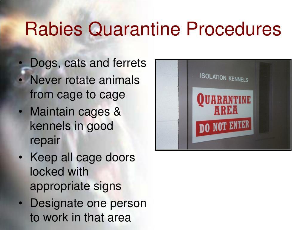 Rabies Quarantine Procedures