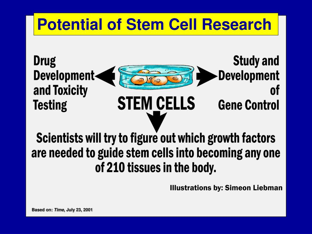 Potential of Stem Cell Research
