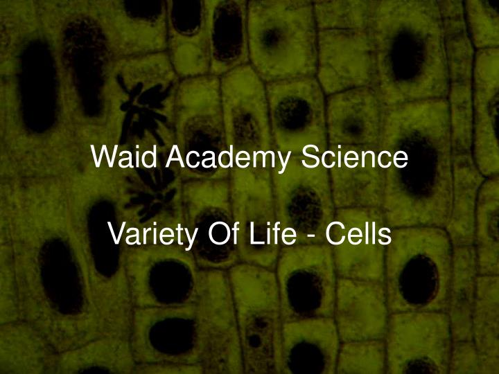 waid academy science n.