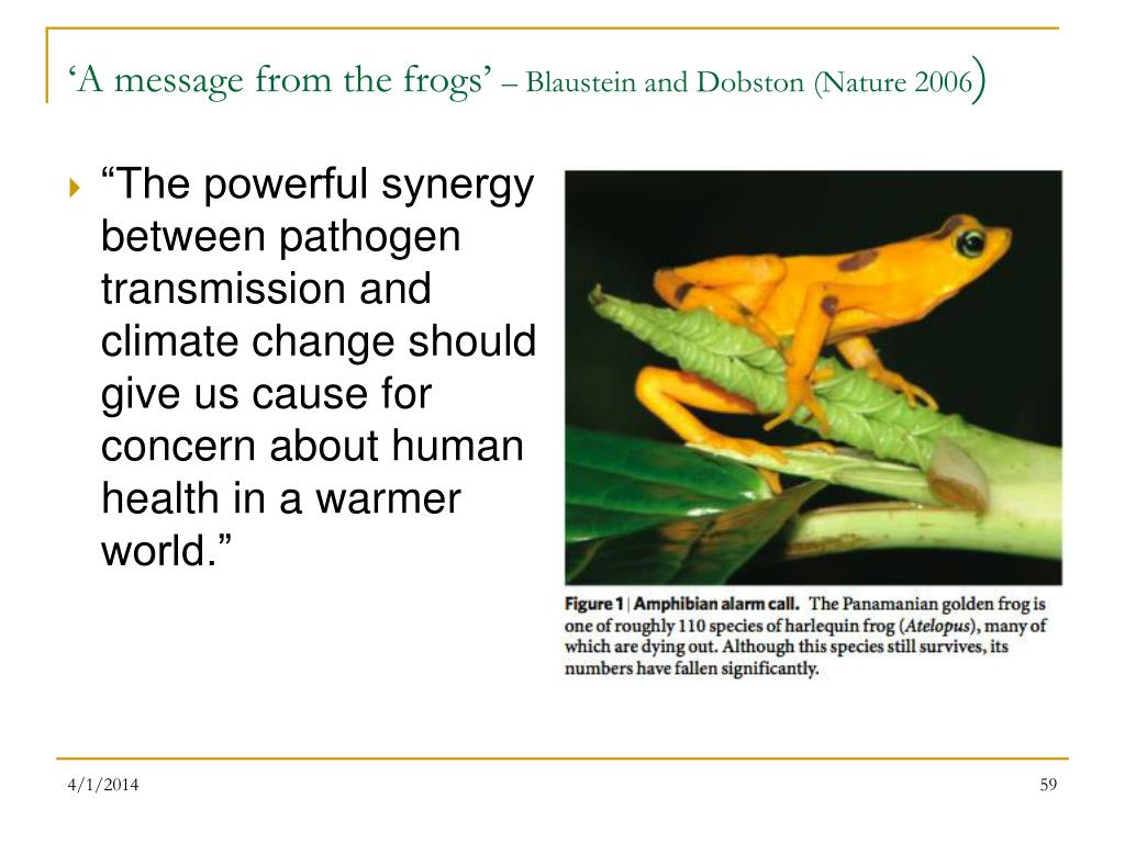 'A message from the frogs'