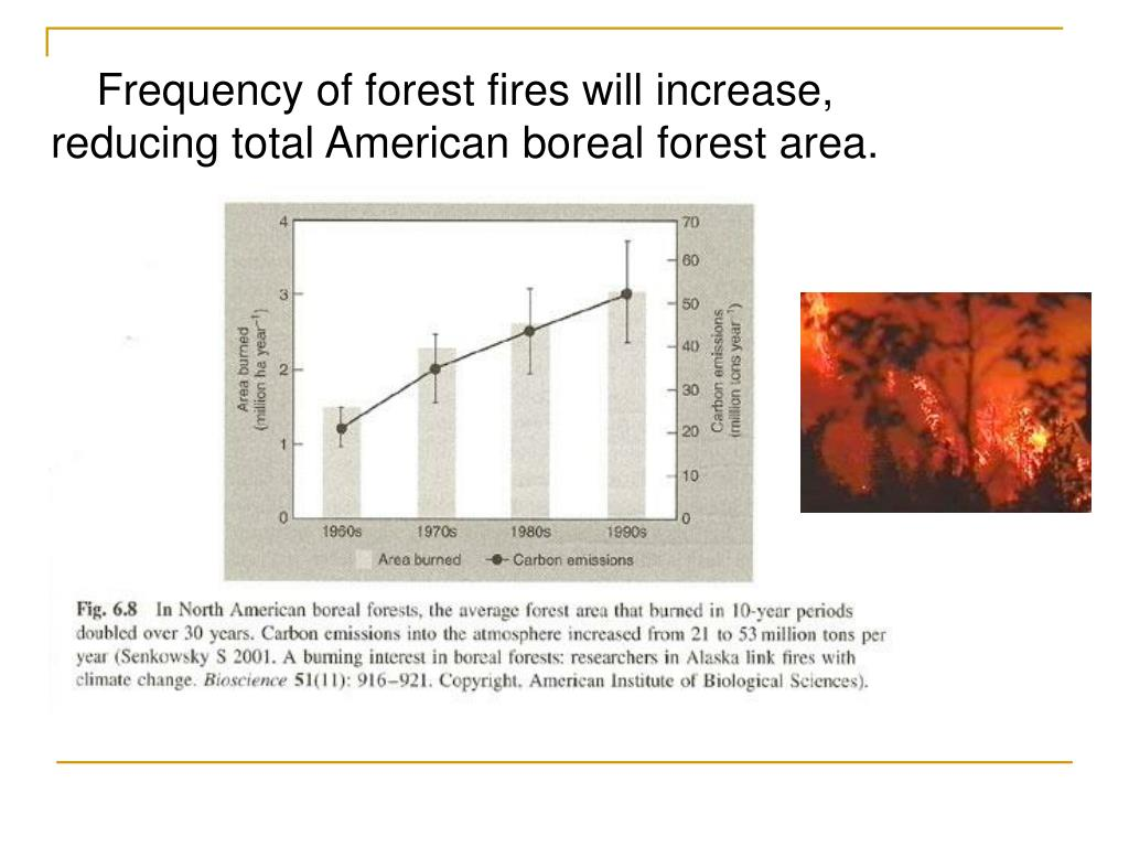 Frequency of forest fires will increase, reducing total American boreal forest area.