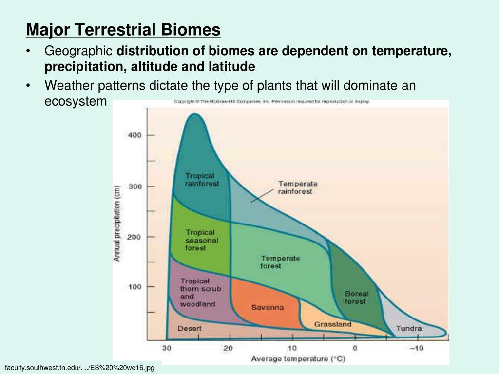 Major Terrestrial Biomes