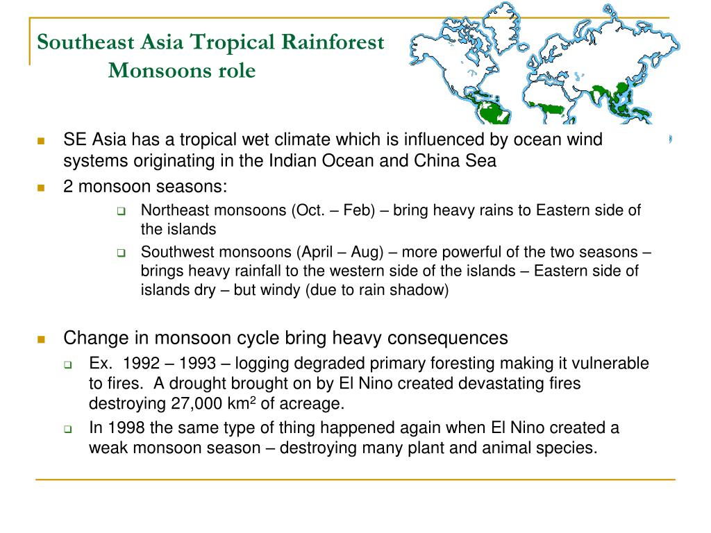 Southeast Asia Tropical Rainforest