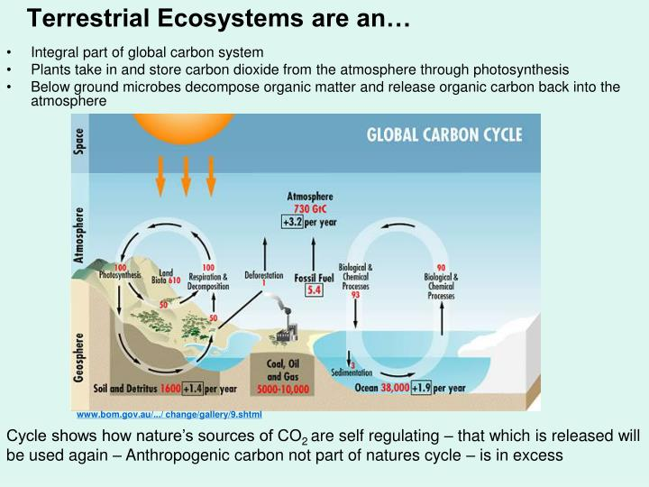 Terrestrial ecosystems are an