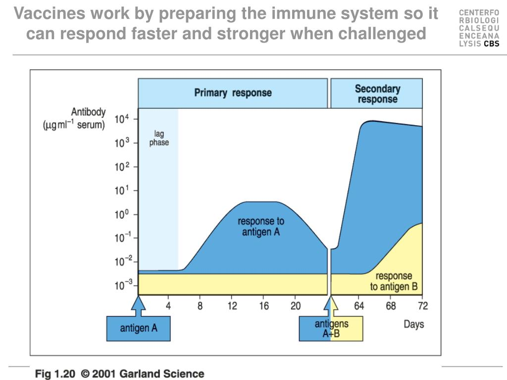 Vaccines work by preparing the immune system so it can respond faster and stronger when challenged